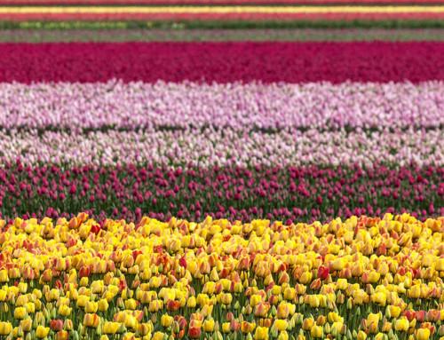 Olanda in camper – Primavera 2016