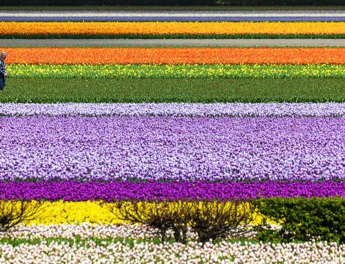 Olanda… in camper tra i tulipani in fiore – Primavera 2018